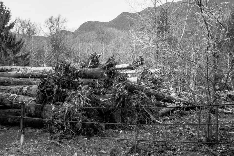 casulaties-and-resiliency-oso-washington