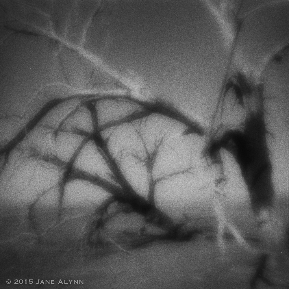 Ghost Tree, Salton Sea