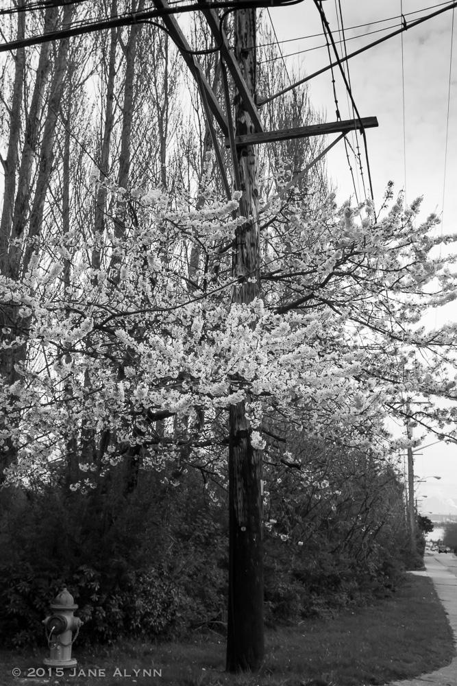 Efflorescent Utility Pole