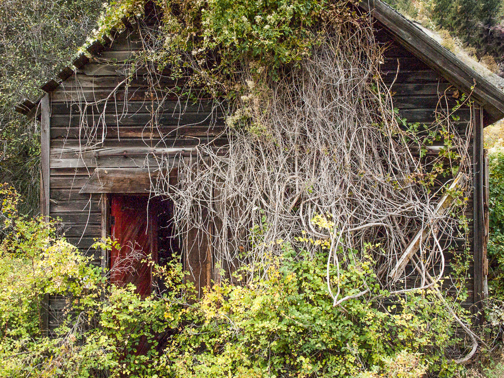 Abandoned house with red door, Loomis, WA
