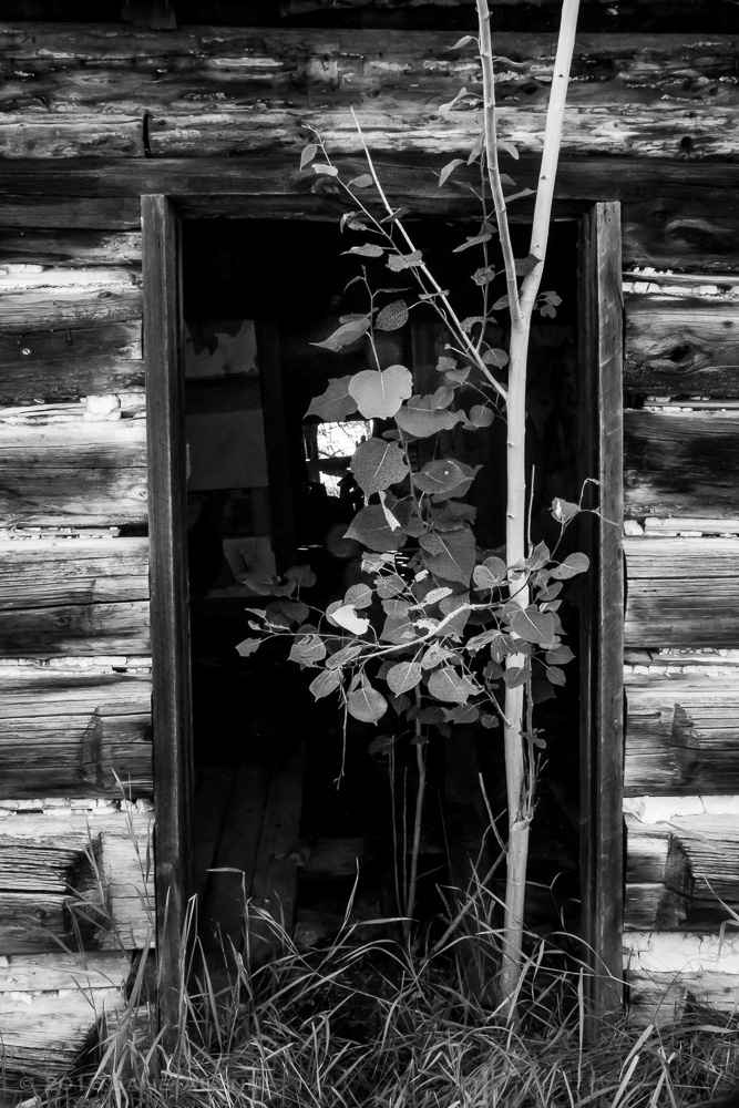 Abandoned building in Bodie