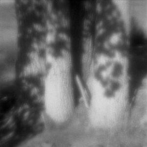 Leaf Shadows, zone plate photograph, gelatin silver print