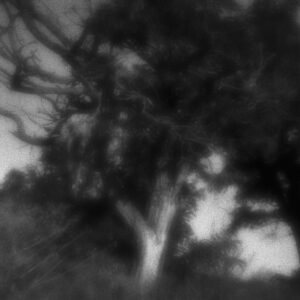 Tree of Life, zone plate photograph, gelatin silver print